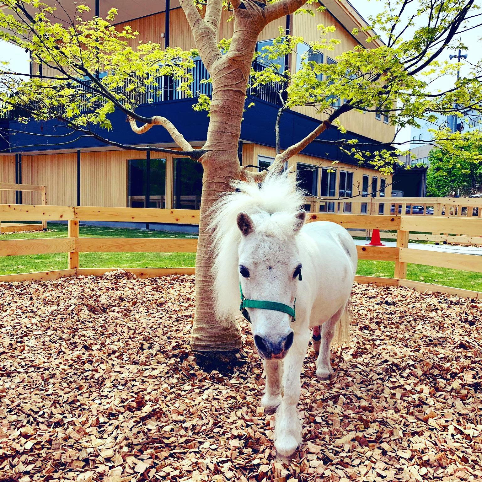 【掲載】「馬と人の福祉」の時代~TCC Therapy Park竣工式&レセプションパーティー取材手記~